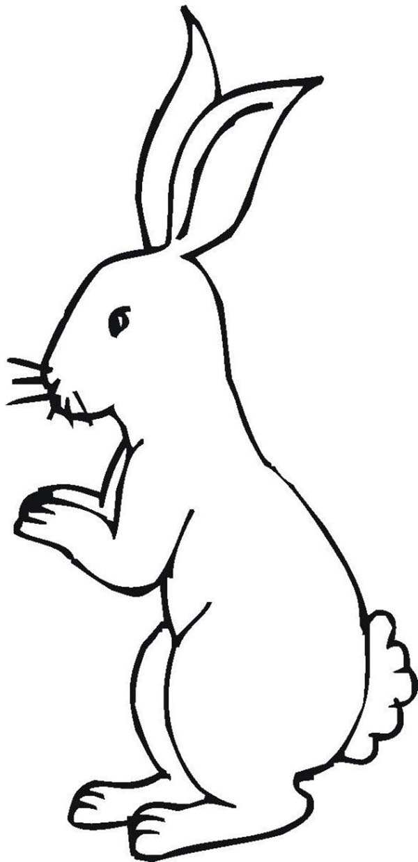 Little Bunny Standing on His Feet Coloring Page - Download ...