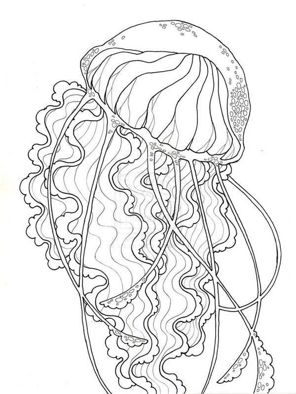 beauty jellyfish coloring page