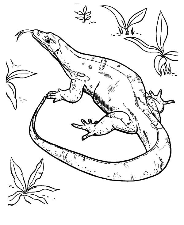 bearded lizard coloring page - 600×734