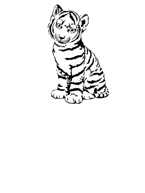 Cute Tiger in Cap coloring page  Free Printable Coloring