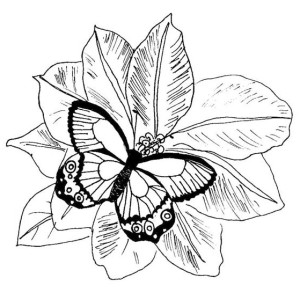 A Butterfly Perch Over Flower Coloring Page
