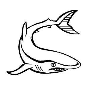 Beware Of White Shark   Free Sea Animals Coloring Page
