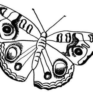Butterfly With Rounded Pattern Wings Coloring Page