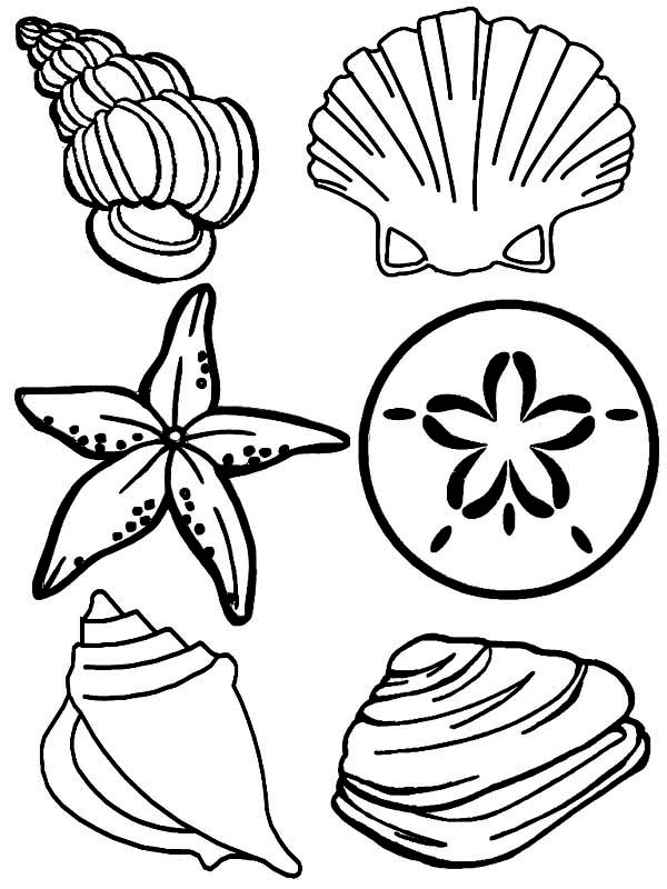 Complete Sea Shells Family Free Coloring Page Download Print