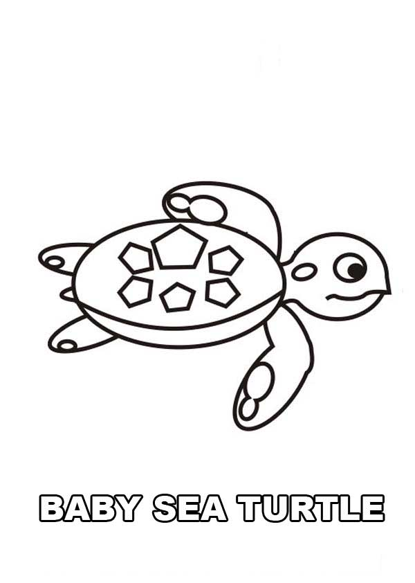 Cute Baby Sea Turtle Free Coloring Page Download Amp Print