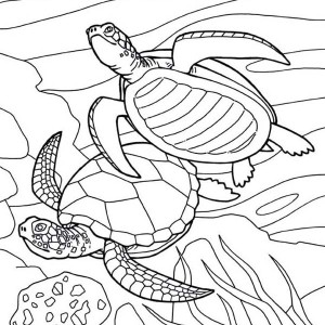 Free Picture Of Sea Turtle Mating Coloring Page