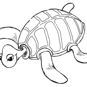 Free Sea Turtle Species Coloring Page