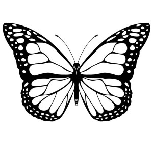 Full Spread Wings Butterfly From The Top View Coloring Page