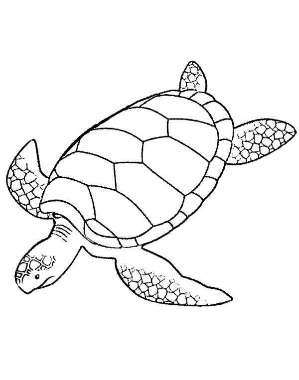 Giant Green Sea Turtle Coloring Page Download Print Online