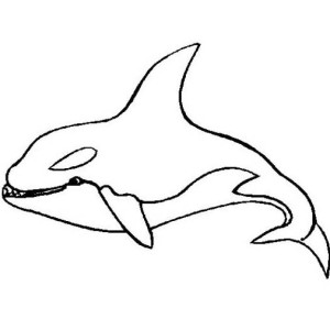 Killer Whale  Orca Sea Animals Coloring Page