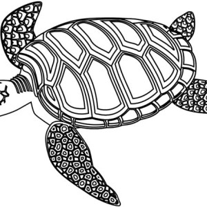 Mozaic Green Sea Turtle Coloring Page
