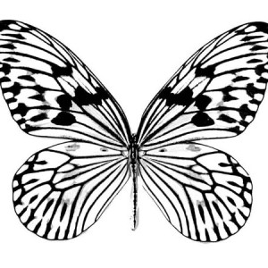 Realistic Butterfly Drawing Coloring Page