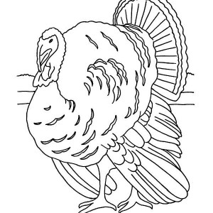 Realistic Thanksgiving Day Turkey Lineart Coloring Page