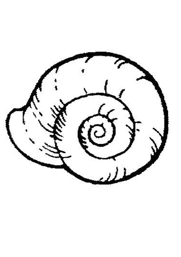 Sea snail free coloring page download print online for Sea snail coloring page