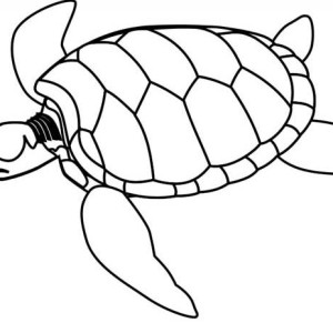 Sea Turtle Endangered Coloring Page