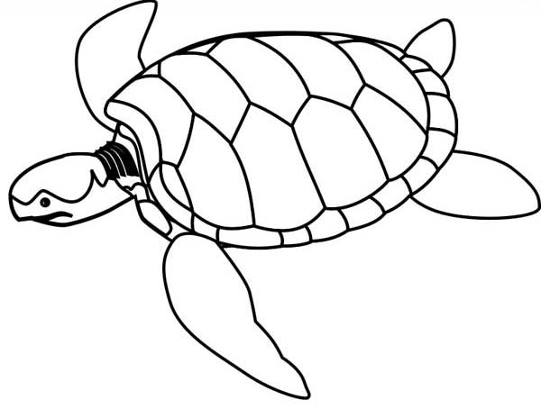 sea turtle endangered coloring page download print online coloring pages for free color nimbus. Black Bedroom Furniture Sets. Home Design Ideas