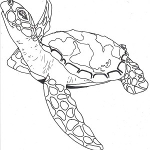 Sea Turtle Facts Free Coloring Page