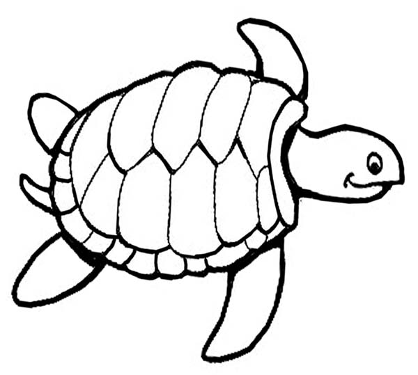 Sea Turtle Knitting Pattern Free Coloring Page Download Print