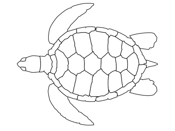 Sea Turtle Pattern Free Coloring Page - Download & Print ...