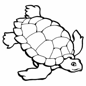 Sea Turtle Research Free Coloring Page