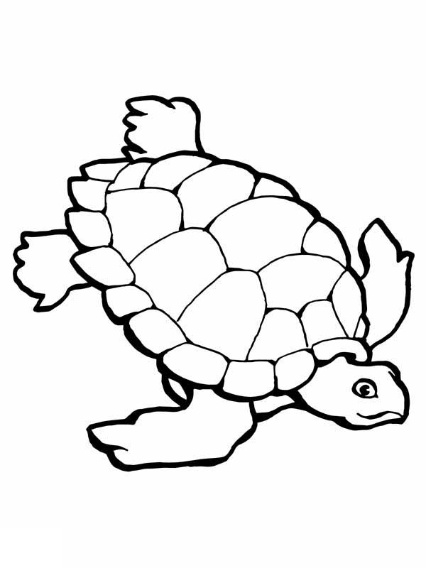 Sea Turtle Research Free Coloring Page - Download & Print ...