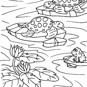 Sea Turtle in a Ponds With a Frog Coloring Page