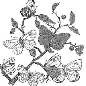 Seven Butterflies Behind The Bush Coloring Page