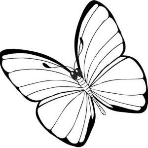 Simple And None Pattern Butterfly Coloring Page