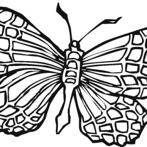 Square Shapped Butterfly Complexion Coloring Page