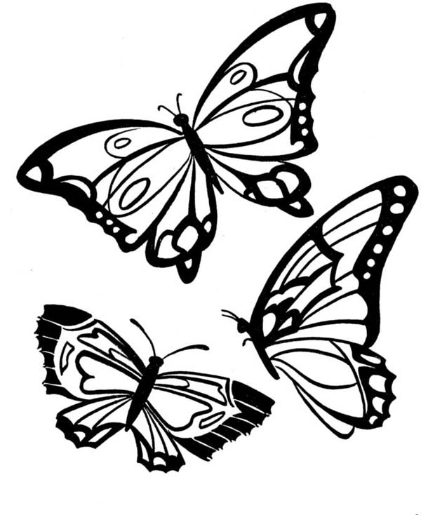 Three Butterflies With Beautiful Complexion Coloring Page ...