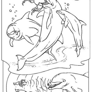 Three Dolphin Hunting Using Their Sonar   Free Animals Coloring Page
