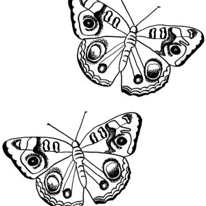 Two Butterflies With Dotted Mark Coloring Page