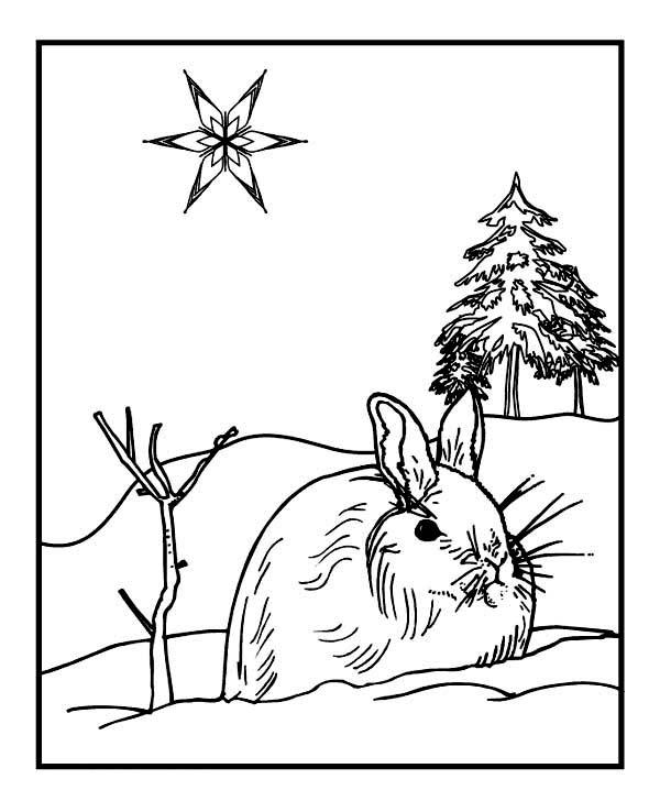 Wild Rabbit On Winter Season Coloring