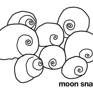 A Bunch Of Moonsnails Seashell Coloring Page