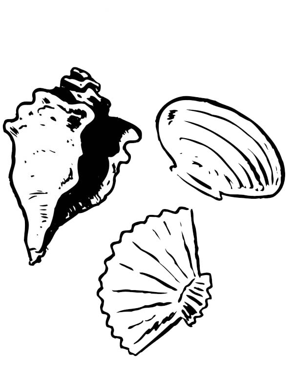A Conch Clam And Scallop Seashell