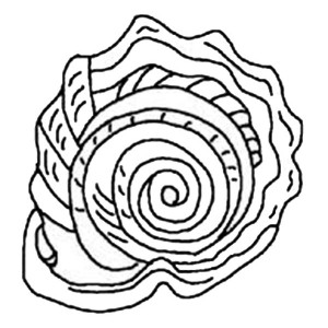 A Gorgeous Spiny Jewel Box Seashell Coloring Page