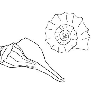 A Pair Of Lightening Whelk And Seasnail Coloring Page