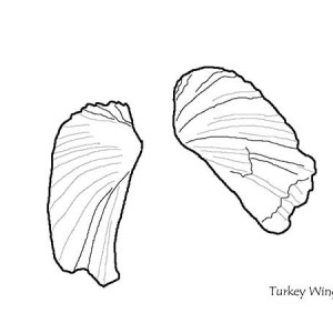 A Pair Of Pretty Turkey Wing Seashell Coloring Page