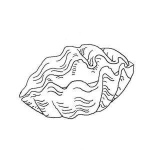 An Open Scallop Seashell Coloring Page