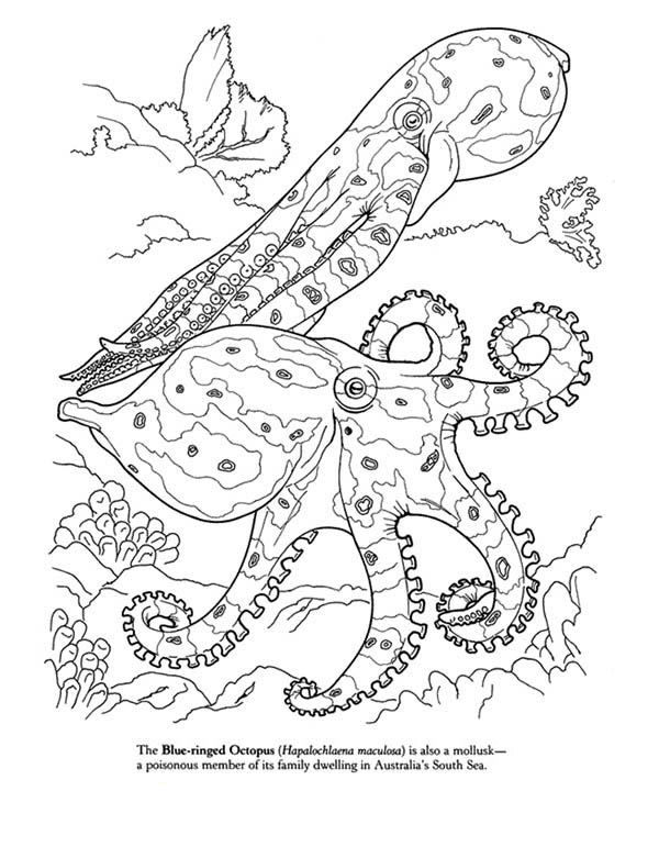 Blue Octopus Coloring Page Download Print Online Coloring Pages