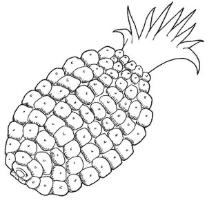 Corn Liked Pattern Pineapple Coloring Page