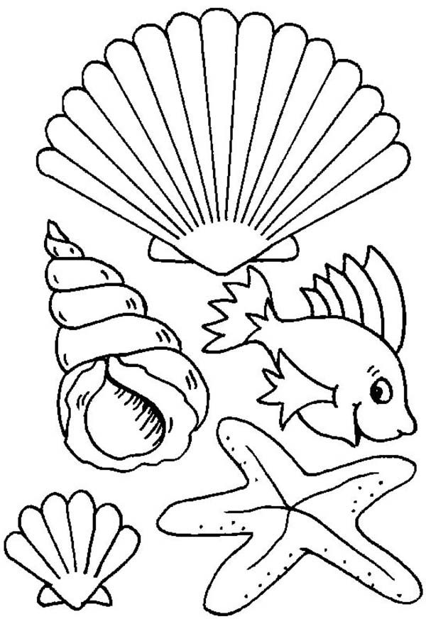 Different Types Of Sea Creature And Seashell Coloring Page