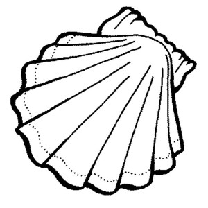 Exquisite Calico Scallop Seashell Coloring Page