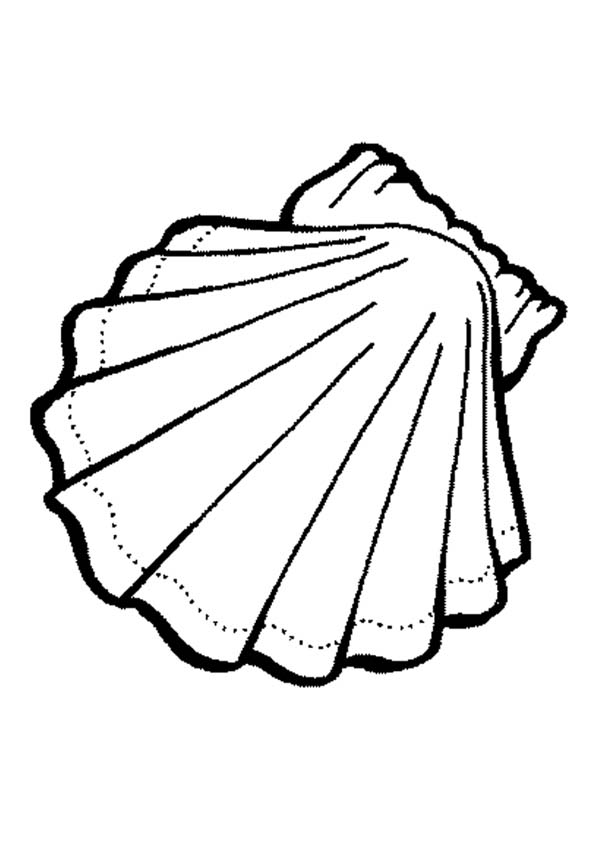 Exquisite Calico Scallop Seashell Coloring Page Download Print