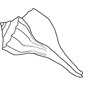 Exquisite Lightning Whelk Seashell Coloring Page