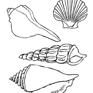 Four Beautiful Types Of Seashell Coloring Page