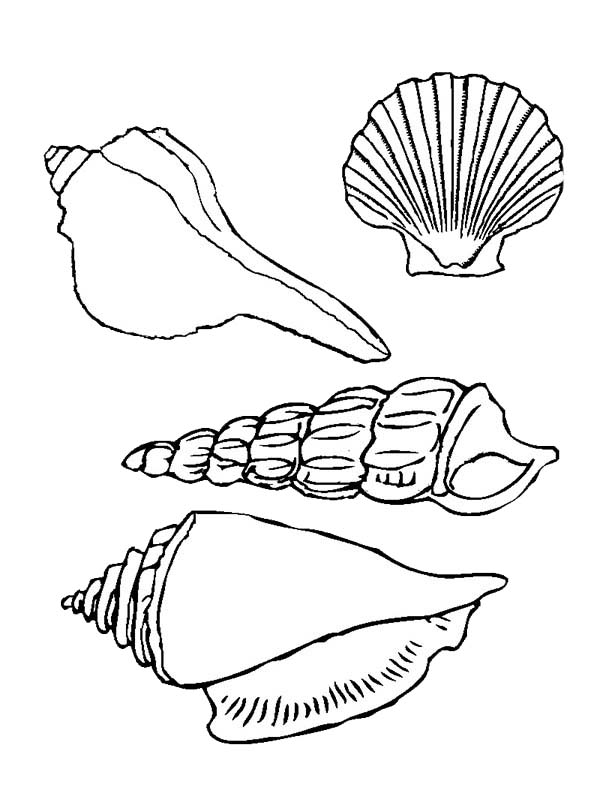 seashell coloring pages to print | Four Beautiful Types Of Seashell Coloring Page - Download ...