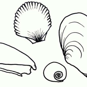 Four Types Of Seashells Coloring Page