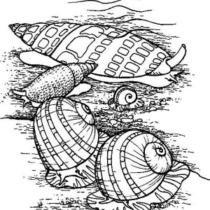 Living Seashells In The Beach Coloring Page