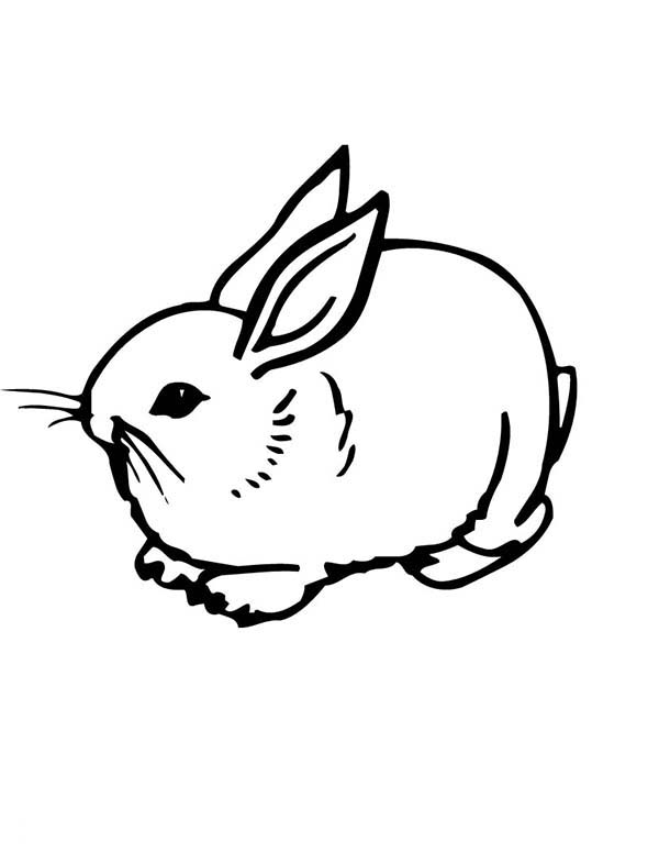 Realistic Image Of A Sweet Little Bunny Coloring Page Download Print Online Coloring Pages For Free Color Nimbus